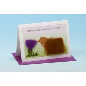 SC29 Scottish Card-HIGHLAND COW AND THISTLE