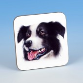 8211 Coaster-MARK CHARLES-COLOURED BORDER COLLIE