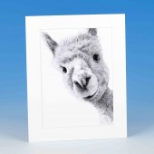 8401 Mounted Print-MARK CHARLES-ALPACA