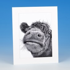 8403 Mounted Print-MARK CHARLES-COW