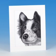 8409 Mounted Print-MARK CHARLES-COLLIE