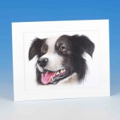8411 Mounted Print-MARK CHARLES-COLOURED COLLIE