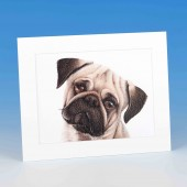 8413 Mounted Print-MARK CHARLES-COLOURED PUG