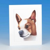 8414 Mounted Print-MARK CHARLES-COLOURED CHIHUAHUA