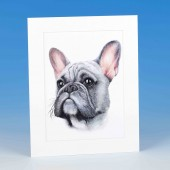 8415 Mounted Print-MARK CHARLES-COLOURED FRENCH BULLDOG
