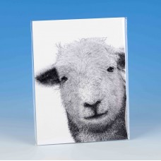 8502 Unmounted Print-MARK CHARLES-SHEEP