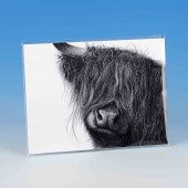 8505 Unmounted Print-MARK CHARLES-HIGHLAND COW