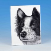 8509 Unmounted Print-MARK CHARLES-COLLIE