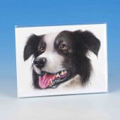 8511 Unmounted Print-MARK CHARLES-COLOURED COLLIE