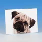 8513 Unmounted Print-MARK CHARLES-COLOURED PUG
