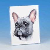 8515 Unmounted Print-MARK CHARLES-COLOURED FRENCH BULLDOG